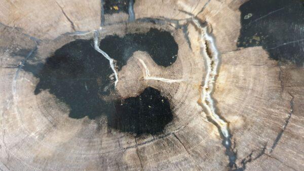Couchtisch versteinertes Holz 33183