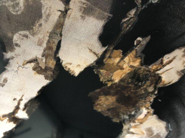 Couchtisch versteinertes Holz 33221