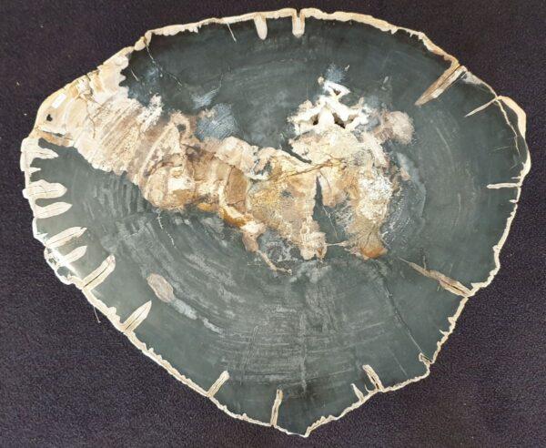 Couchtisch versteinertes Holz 33239