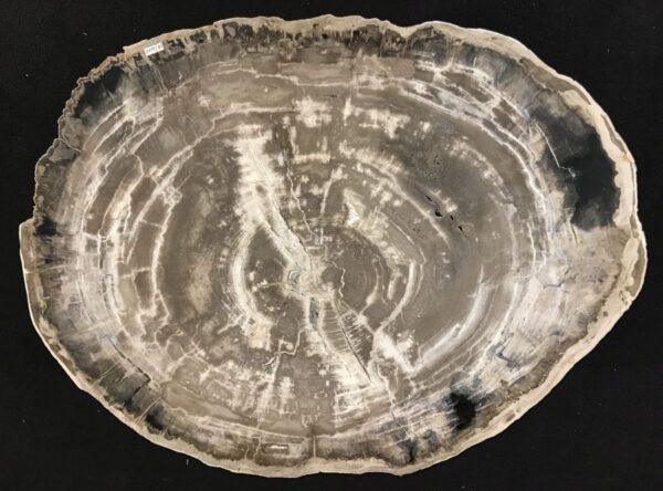 Couchtisch versteinertes Holz 33269