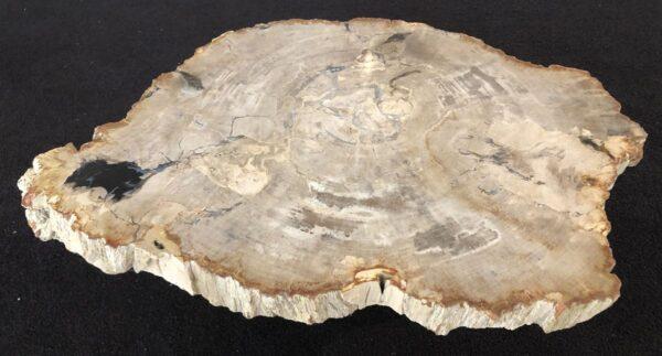 Couchtisch versteinertes Holz 33272