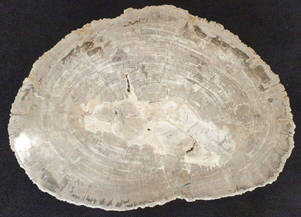 Couchtisch versteinertes Holz 33283