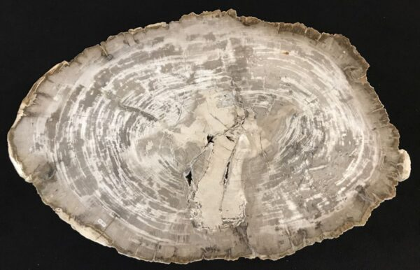 Couchtisch versteinertes Holz 33347