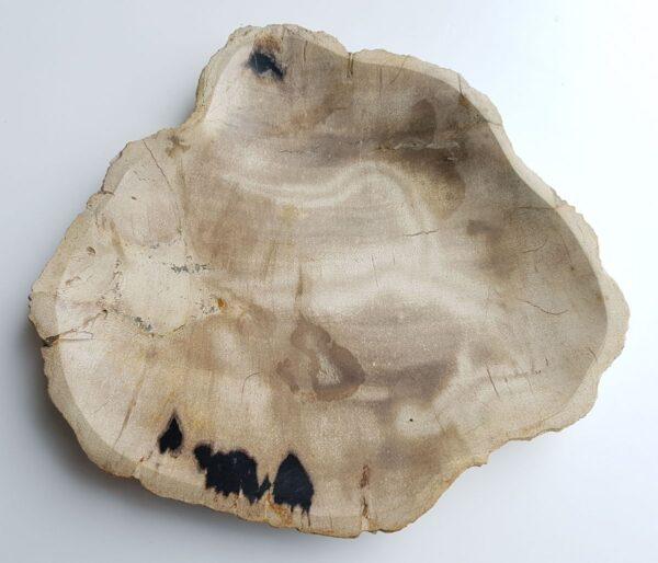 Plato madera petrificada 33003f