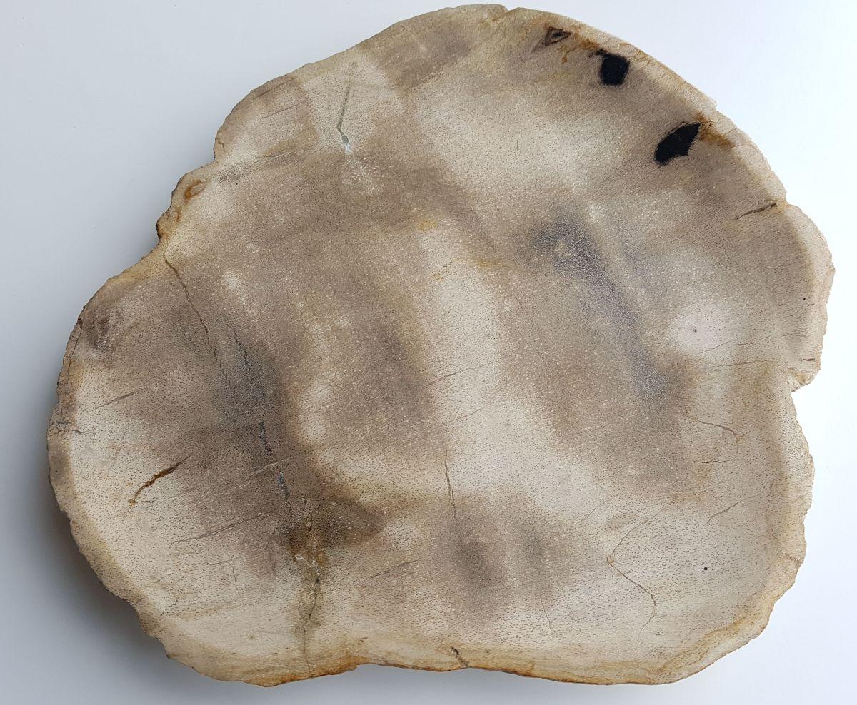 Plato madera petrificada 33003g