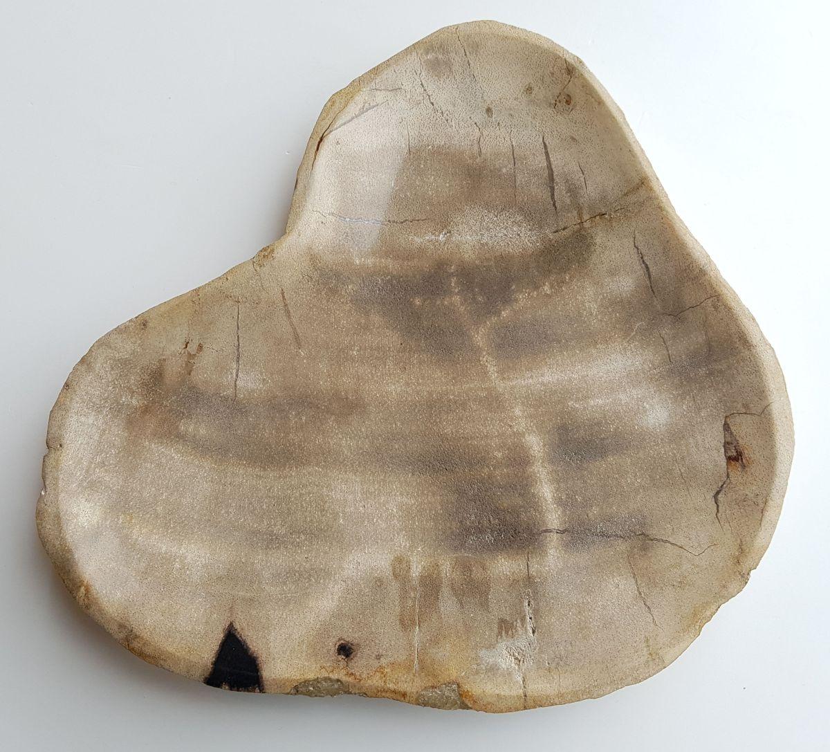 Plato madera petrificada 33004h