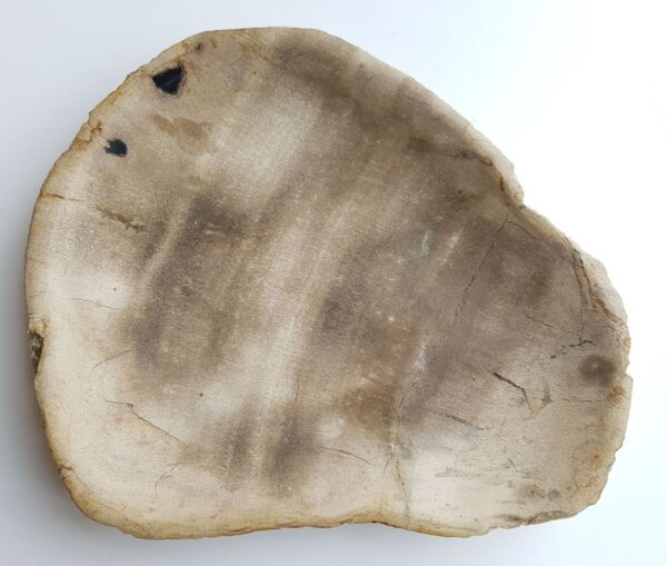 Plato madera petrificada 33004j