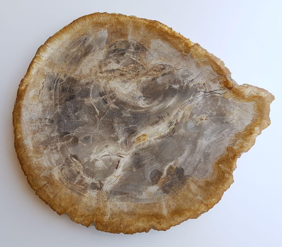 Plato madera petrificada 33008d