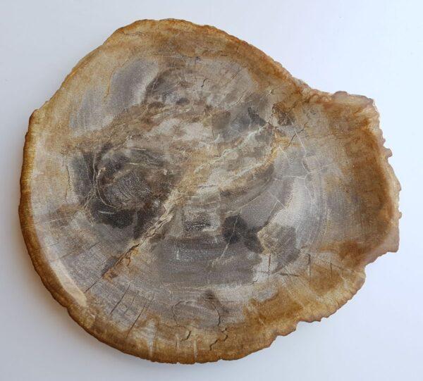 Plato madera petrificada 33008e