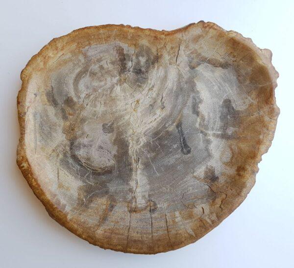 Plato madera petrificada 33008f