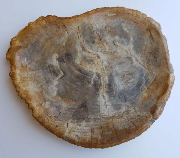 Plato madera petrificada 33008g