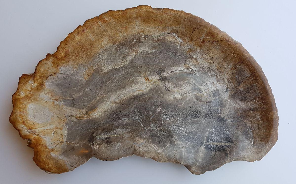 Plato madera petrificada 33008h