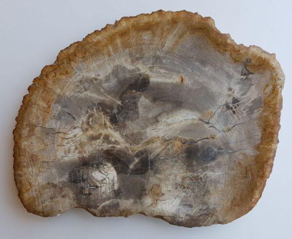 Plato madera petrificada 33008i