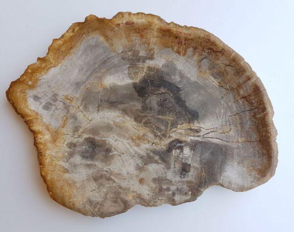 Plato madera petrificada 33008j