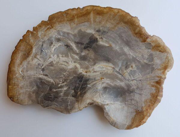 Plato madera petrificada 33008k