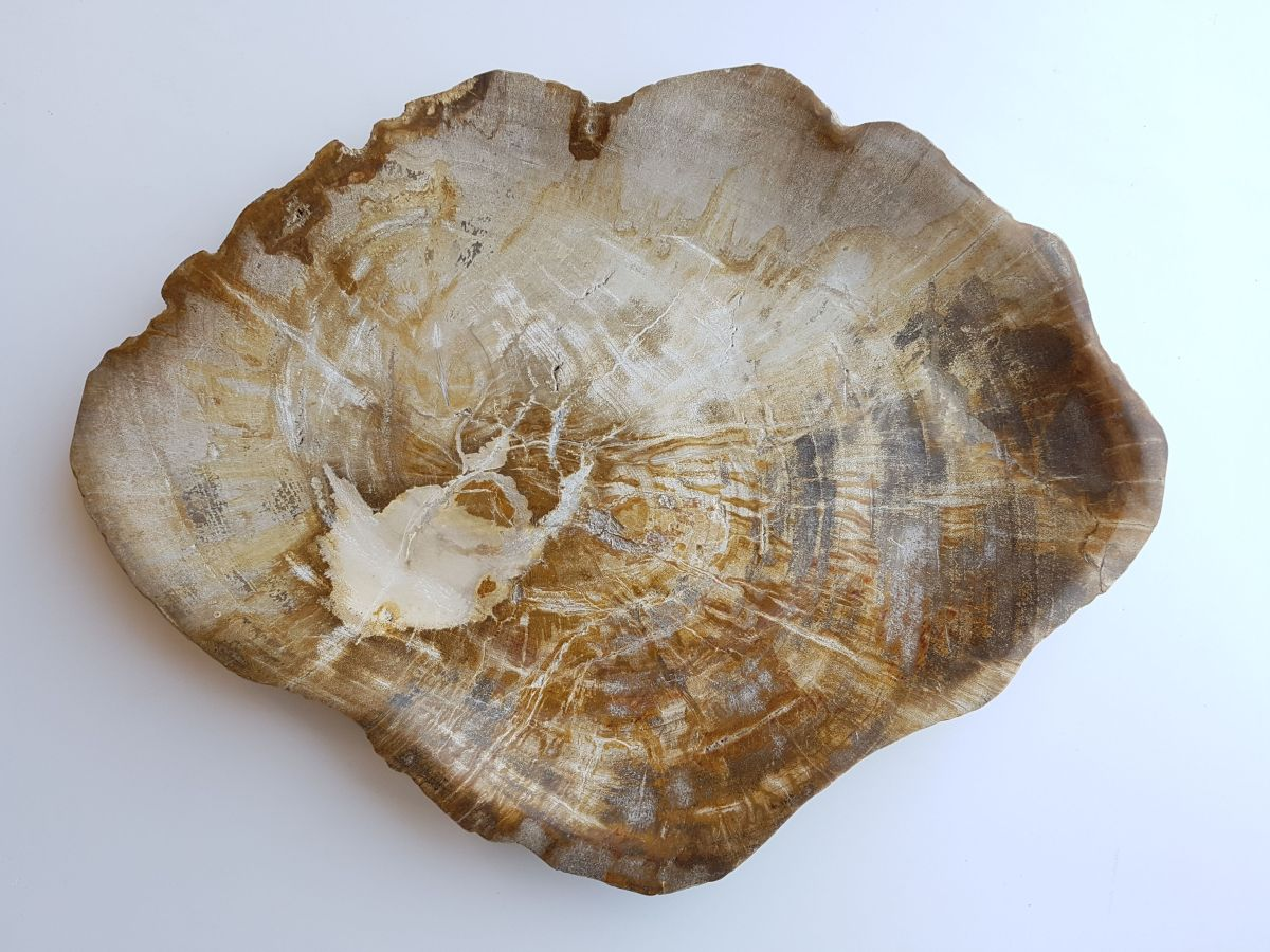 Plato madera petrificada 33008l