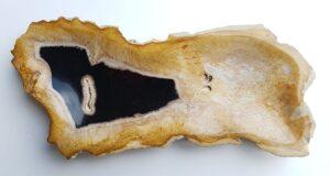 Plato madera petrificada 33012d
