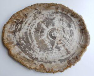 Plato madera petrificada 33013a