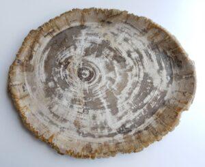 Plato madera petrificada 33013c