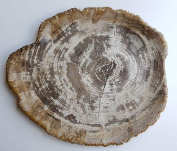 Plato madera petrificada 33013d