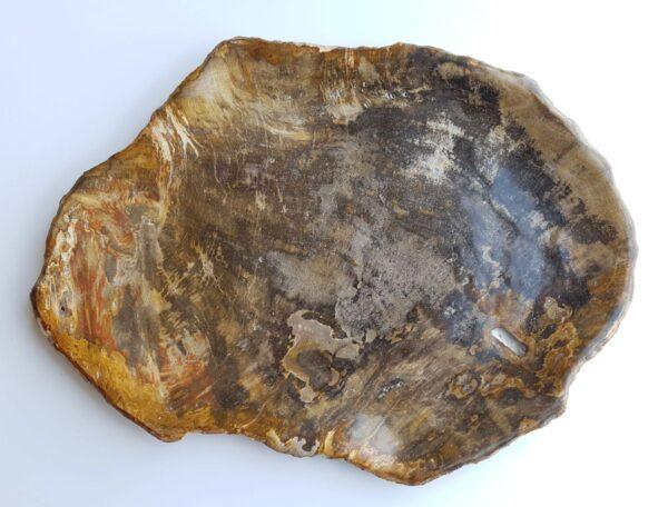 Plato madera petrificada 33017b