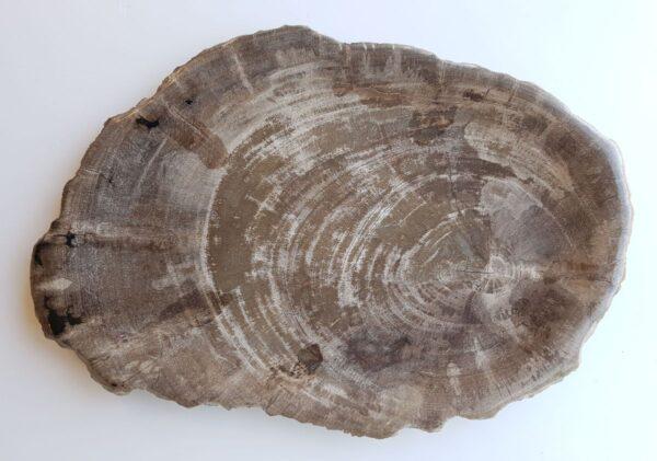 Plato madera petrificada 33021b