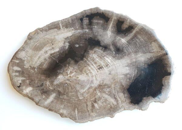 Plato madera petrificada 33021c