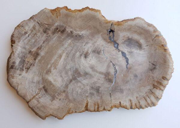 Plato madera petrificada 33023c