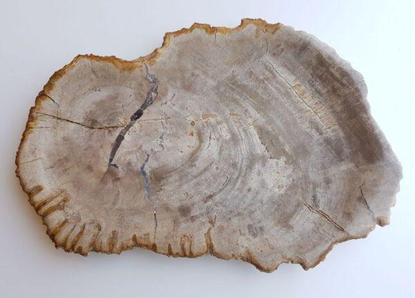 Plato madera petrificada 33023d