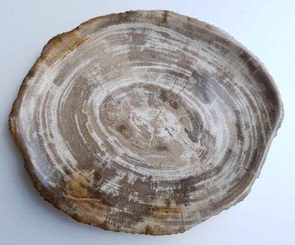 Plato madera petrificada 33029a