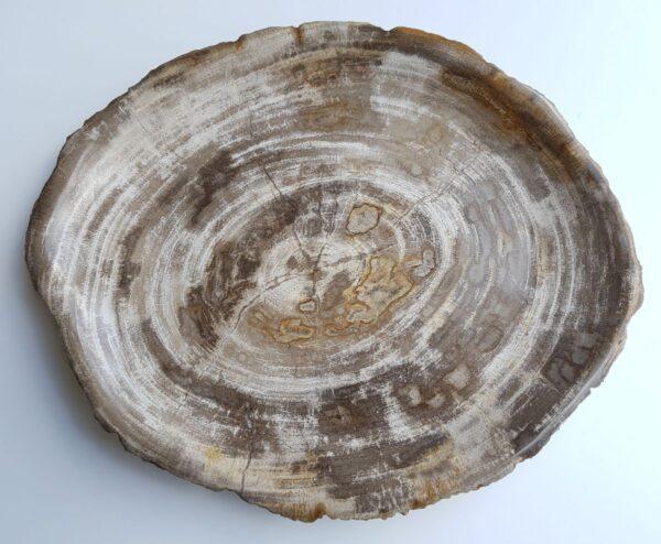 Plato madera petrificada 33029b