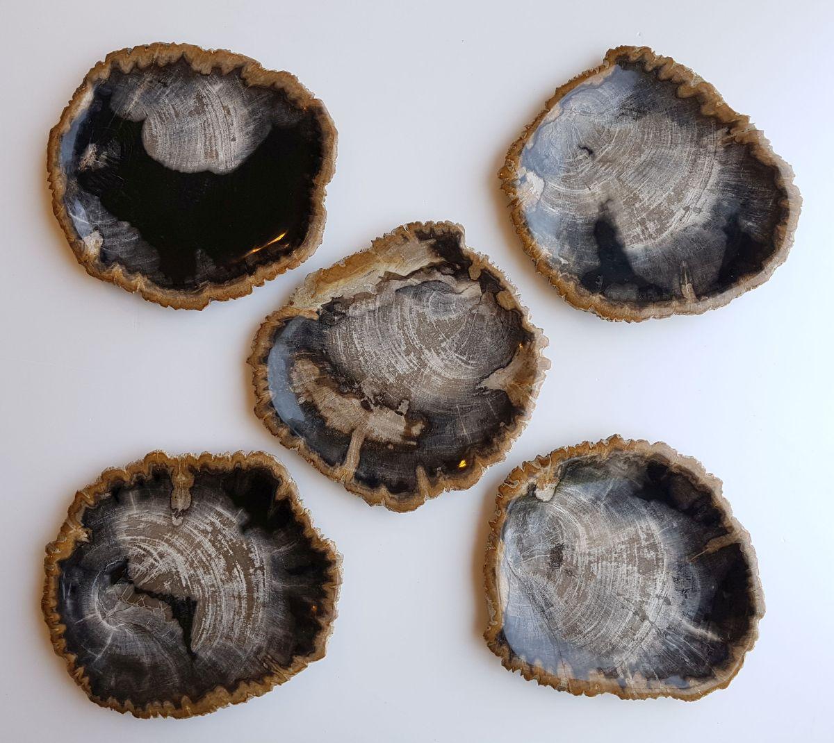 Plato madera petrificada 33030a