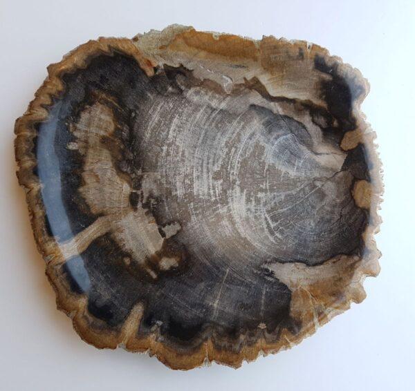 Plato madera petrificada 33030c