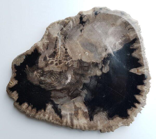 Plato madera petrificada 33030f