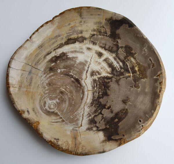Plato madera petrificada 33047d