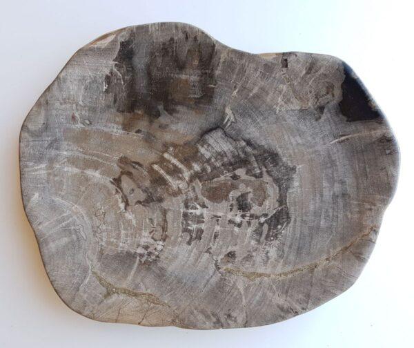 Plato madera petrificada 33049a