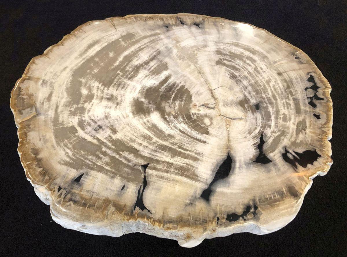 Mesa de centro madera petrificada 31169