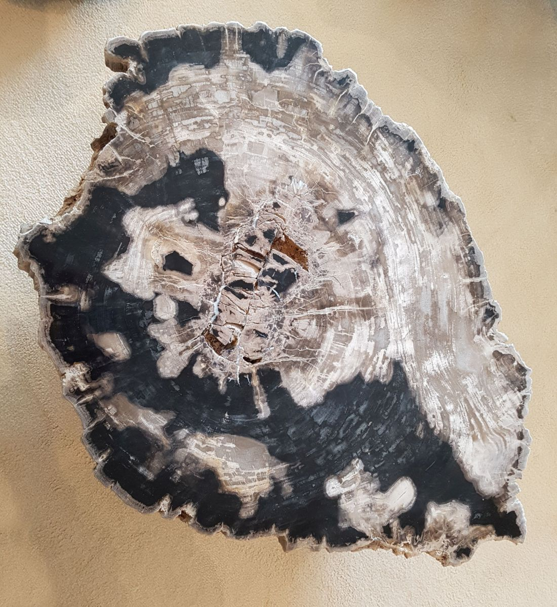 Mesa de centro madera petrificada 32237
