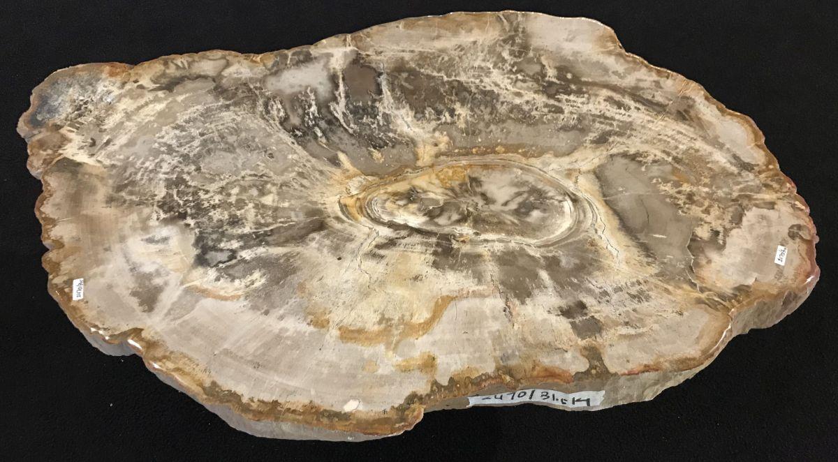 Mesa de centro madera petrificada 33128