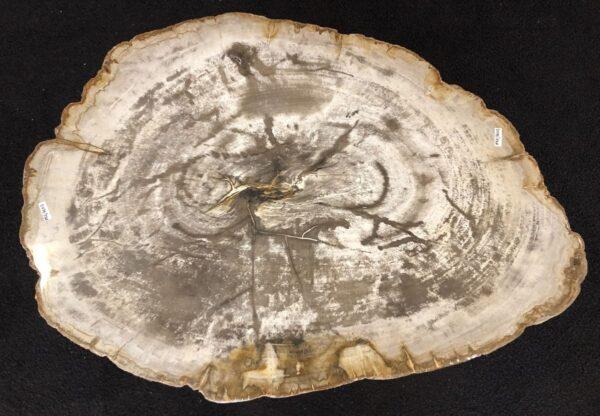 Mesa de centro madera petrificada 33142
