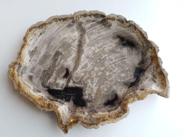 Plate petrified wood 33003a