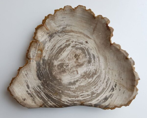 Plate petrified wood 33003c