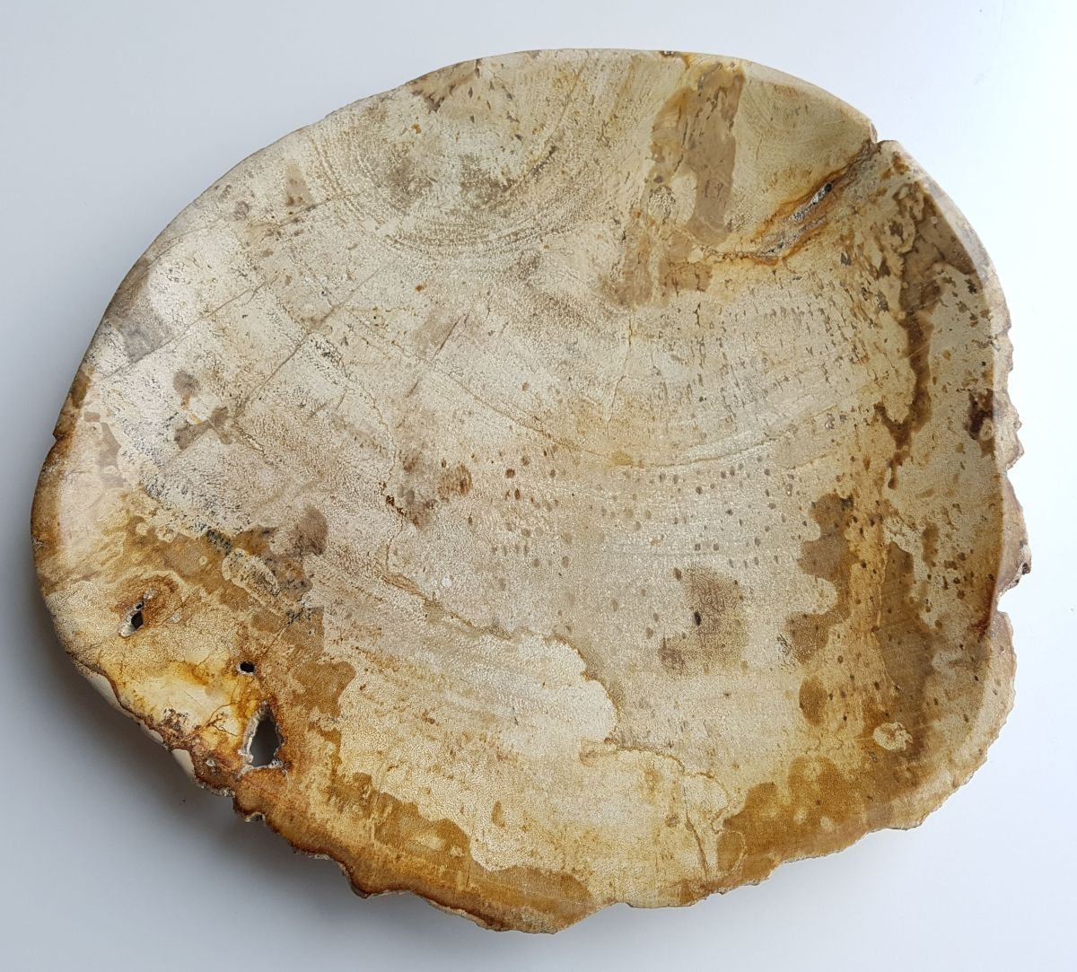 Plate petrified wood 33003e