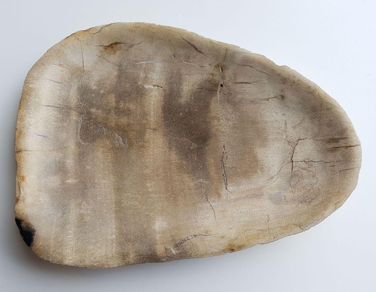 Plate petrified wood 33004l
