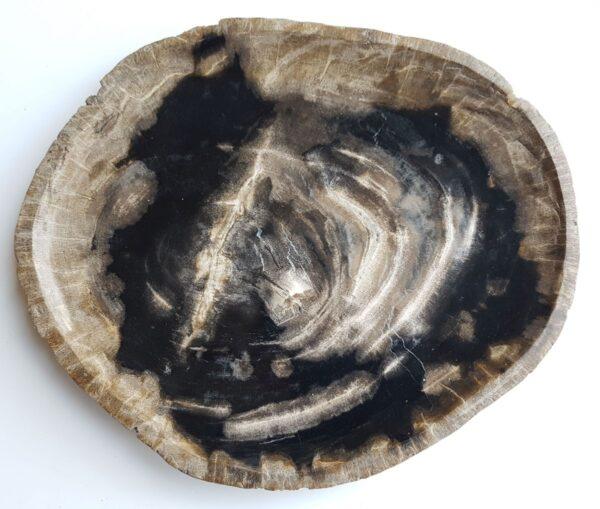 Plate petrified wood 33009a