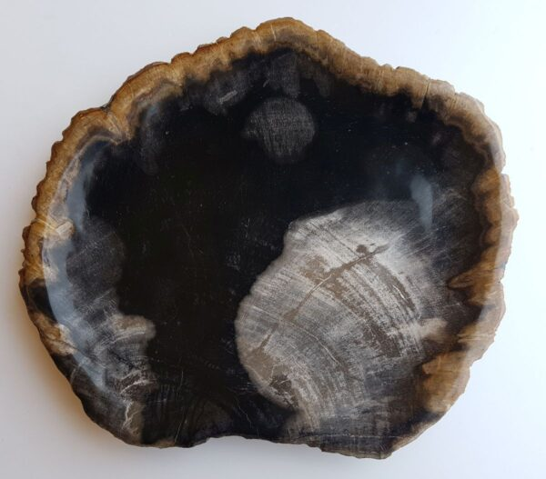 Plate petrified wood 33018c