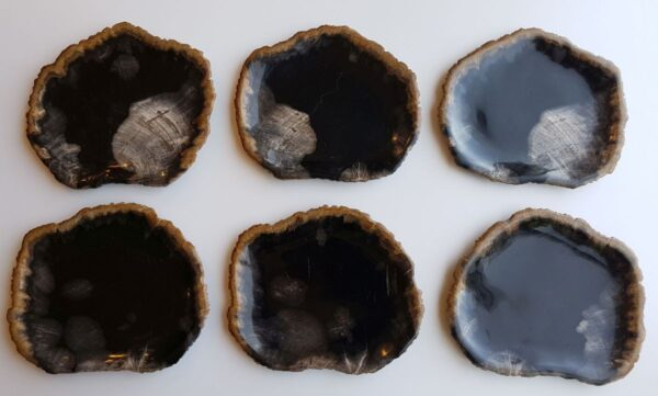 Plate petrified wood 33018e