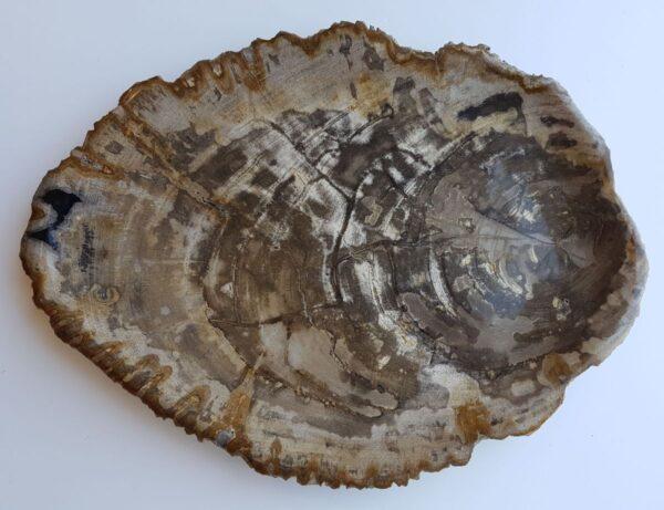 Plate petrified wood 33021g