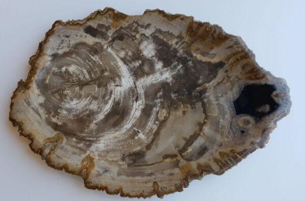 Plate petrified wood 33021h