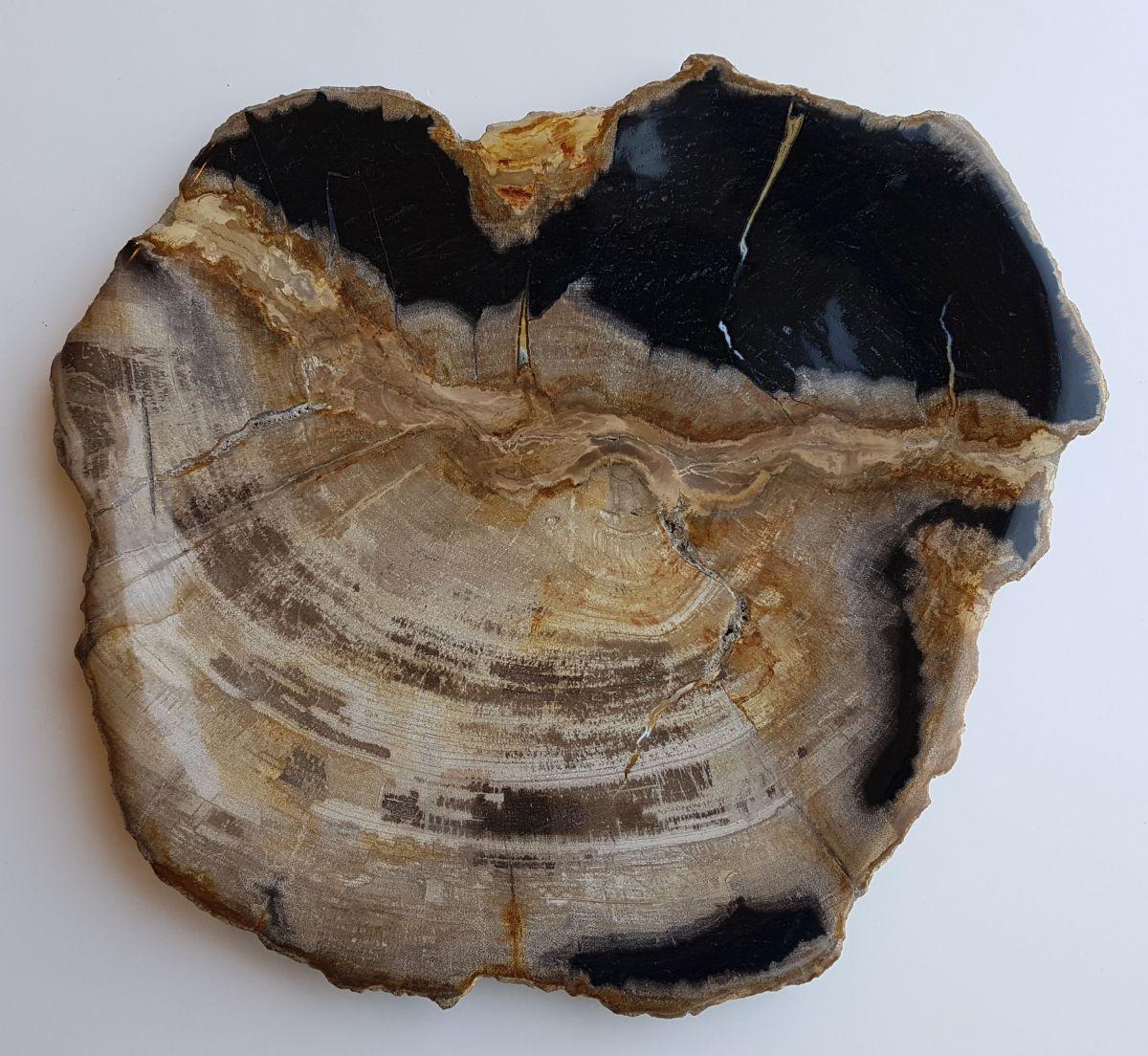 Plate petrified wood 33031a